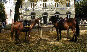 "Chevaux à la barre d'attache devant le restaurant ""La Maison Communale"" à Céroux-Mousty (Ottignies)"